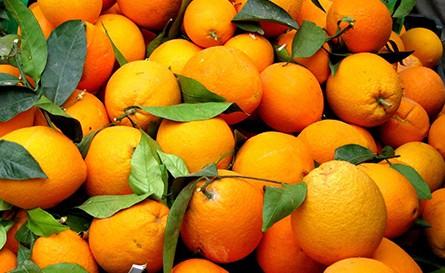 http://www.shoobridge.com.au/wp-content/uploads/oranges.jpg